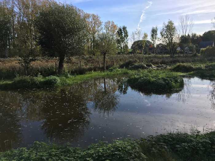 Vergaderen in de natuur: natuurlijke vijver in de schapenweide