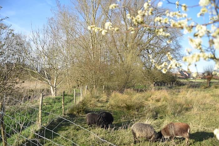 Sheeps pasture at Creative Wonderland