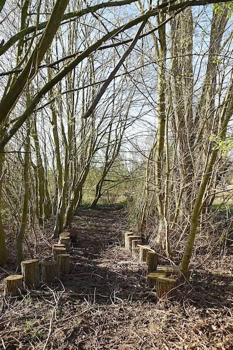 Vergaderen in het bos bij Creative Wonderland nabij Leuven