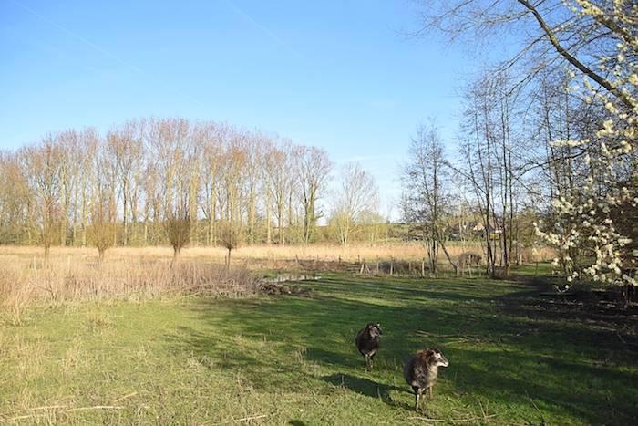 Zicht op de schapenweide en natuurlijke vijver, vergaderen in het groen